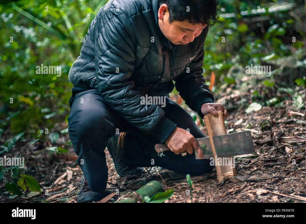 Man chopping bamboo with machete in Hidden Valley, Cat Ba Island, Quang Ninh, Vietnam Stock Photo