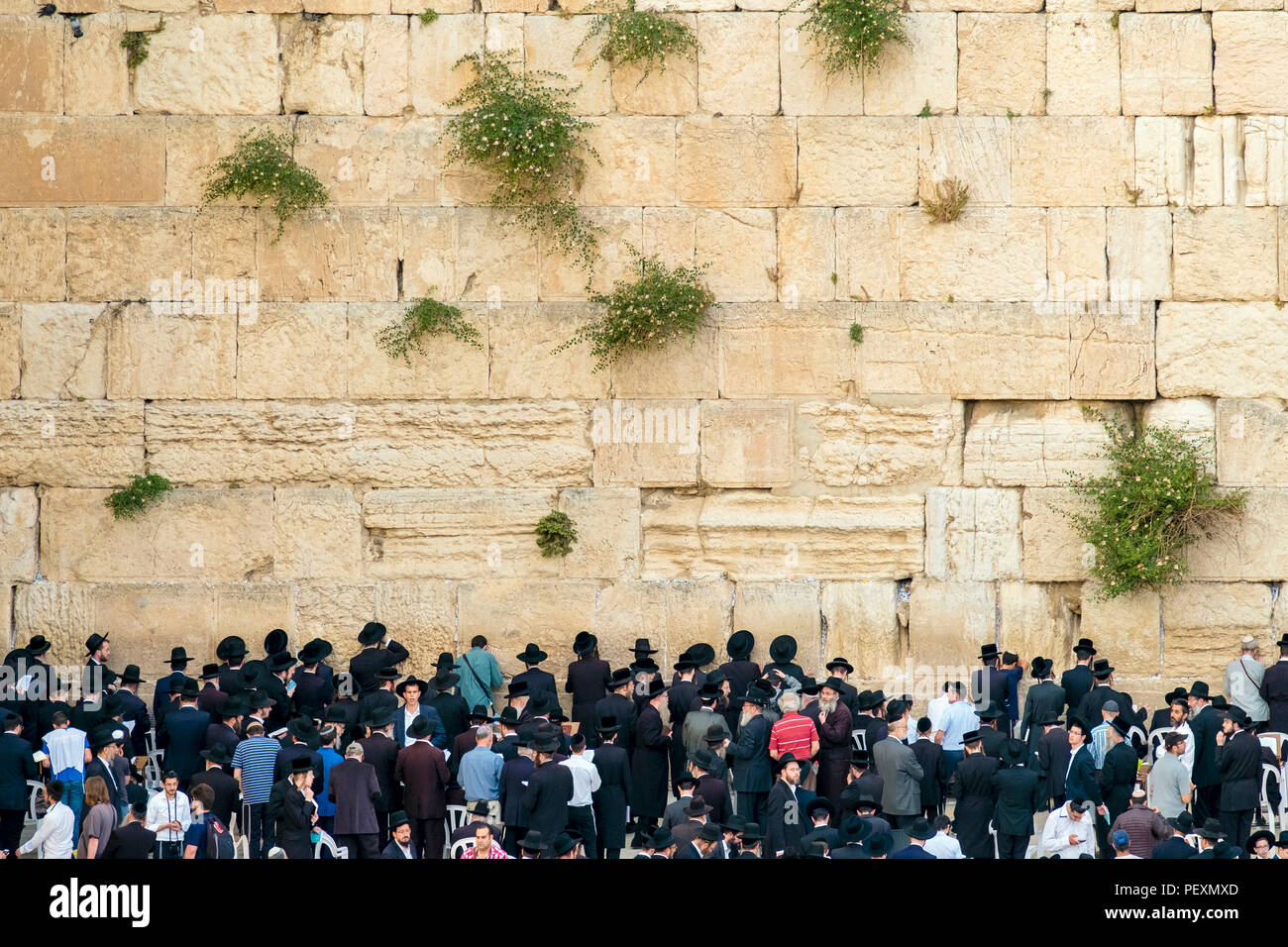 Jews praying at the Western Wall, Jerusalem, Israel - Stock Image