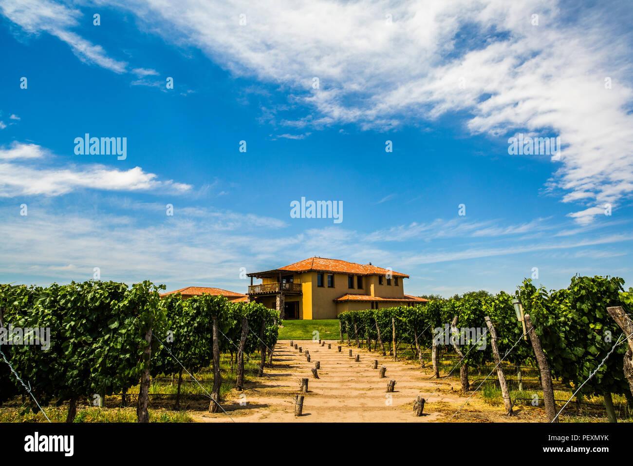 House at vineyard, Mendoza, Argentina - Stock Image