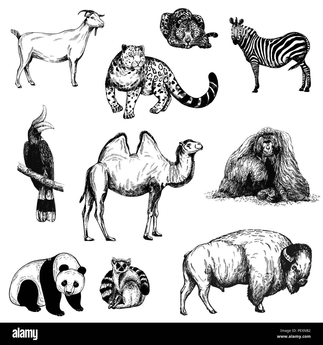 Set of hand drawn sketch style animals and birds isolated on white background. Vector illustration. - Stock Vector