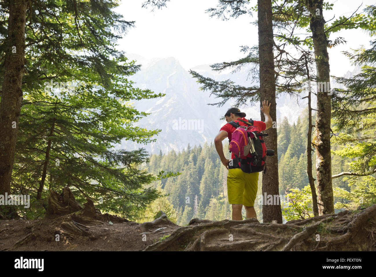 Young man leans exhausted against a tree in a mountain forest, he is on a mountain hike alone in the forest of the Gesäuse National Park in summer. - Stock Image