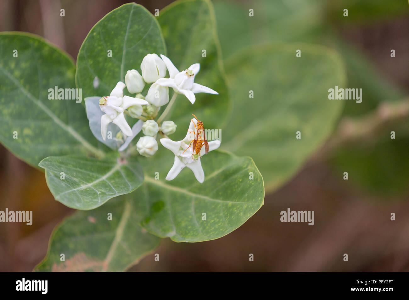 Dhaka Urbanization flower - Stock Image