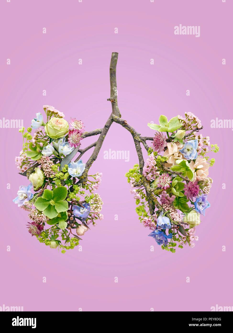Spring flowers representing human lungs, conceptual studio shot. - Stock Image