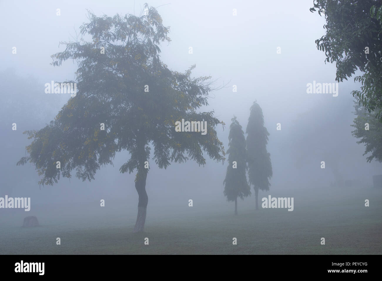 Trees with various shapes and contours in a garden of Khajuraho temple complex with very thick fog forming a mysterious landscape Madhya Pradesh India - Stock Image