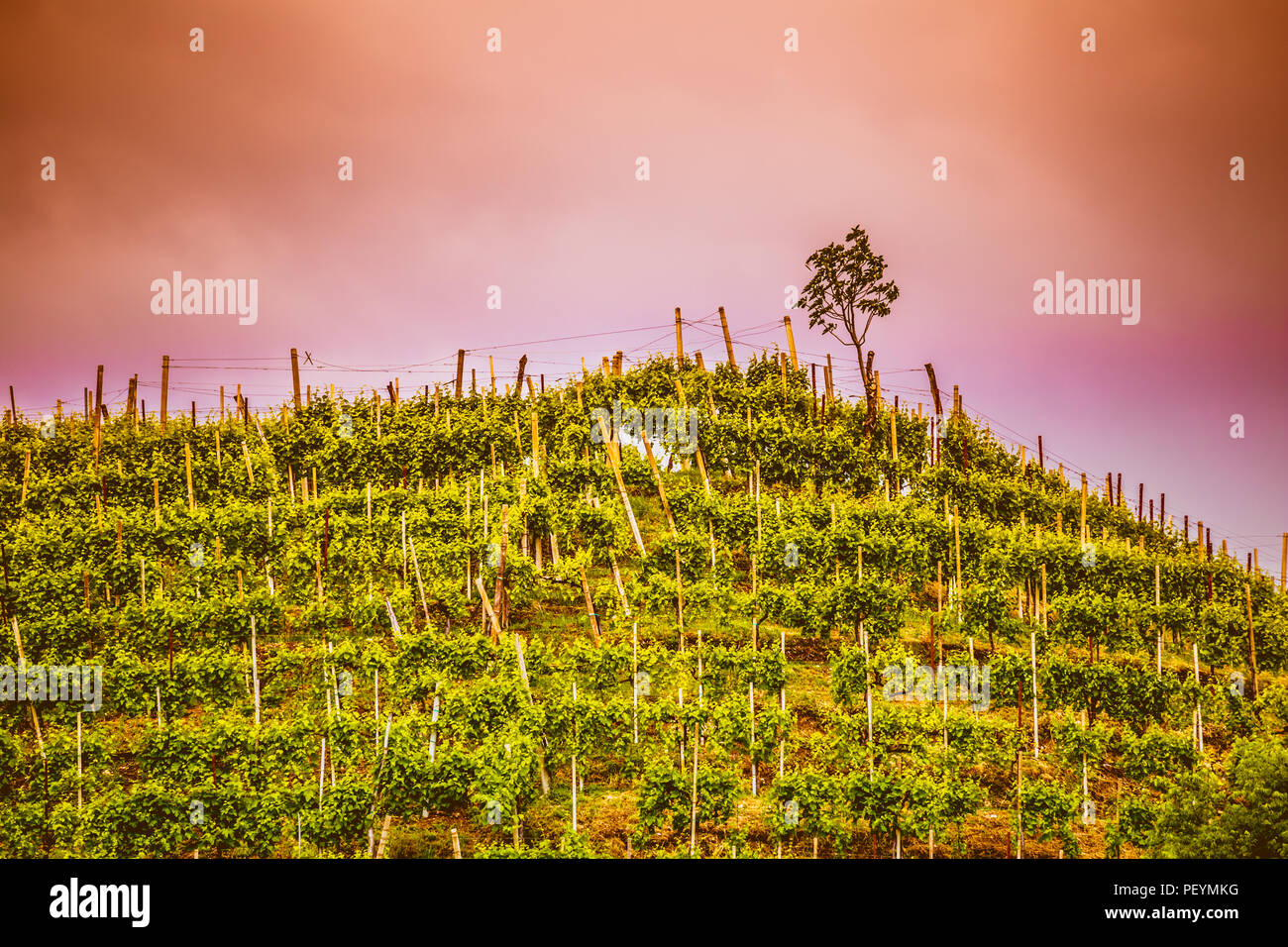 The picturesque landscape full of vineyards around the town of Valdobbiadene vine region, Italy Stock Photo
