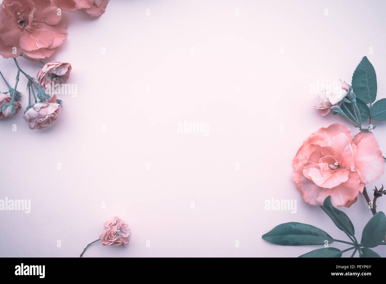 Gentle Floral Border Abstract Natural Wallpaper Baby Pink Roses