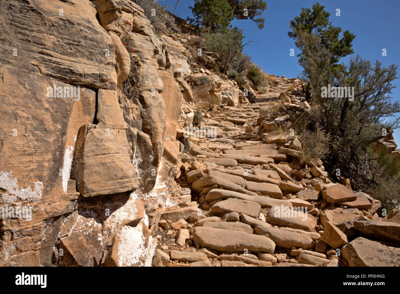 AZ00316-00...ARIZONA - The GrandView Trail in a steep section covered with cobble stones in Grand Canyon National Park. - Stock Image