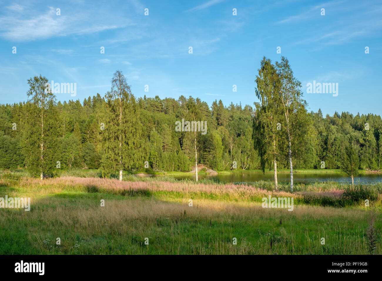 Summer evening by lake Gjardefjarden in Lovanger in northern Sweden. - Stock Image