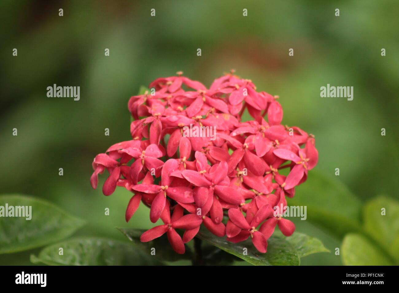 Spring season in india stock photos spring season in india stock beautiful park in spring season in india stock image mightylinksfo