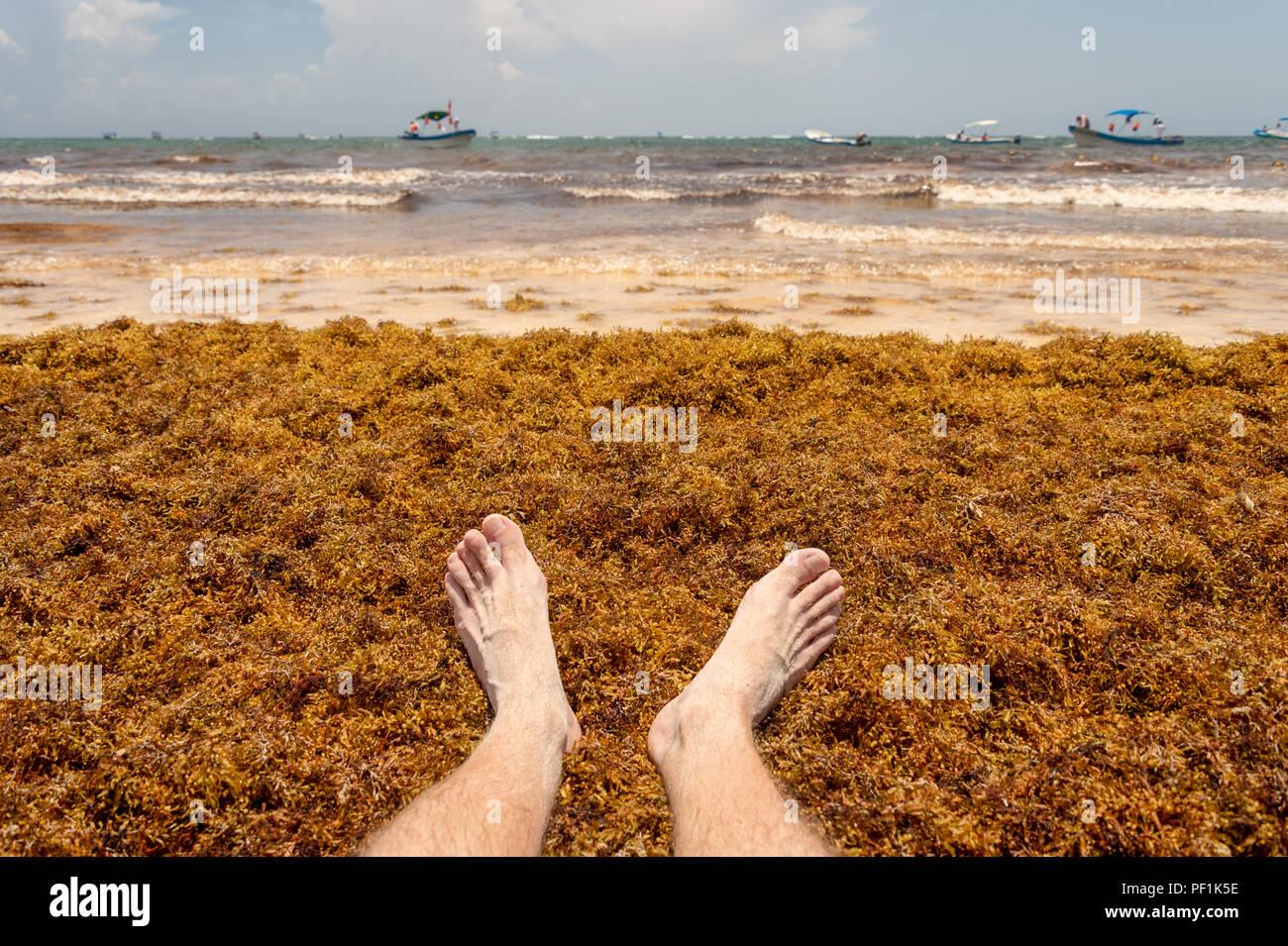 Feet on Sargassum seaweed at the beach, near Tulum, Mexico - Stock Image