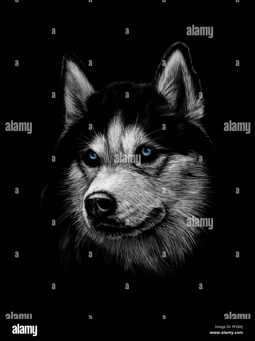 Portrait of the head of the Siberian Husky with blue eyes - Stock Vector