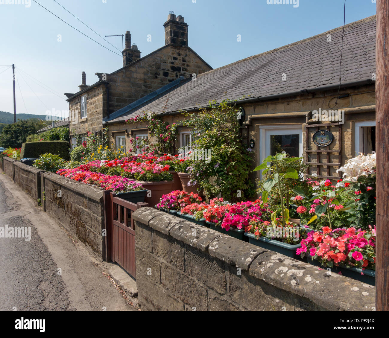 Pink colorful flowerpots have been well looked after to keep the blooms in tip top condition without rainfall, Osmotherley, North Yorkshire Moors - Stock Image