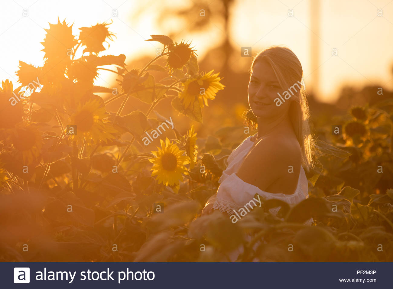 Slavic blond girl on the field of sunflowers - Stock Image