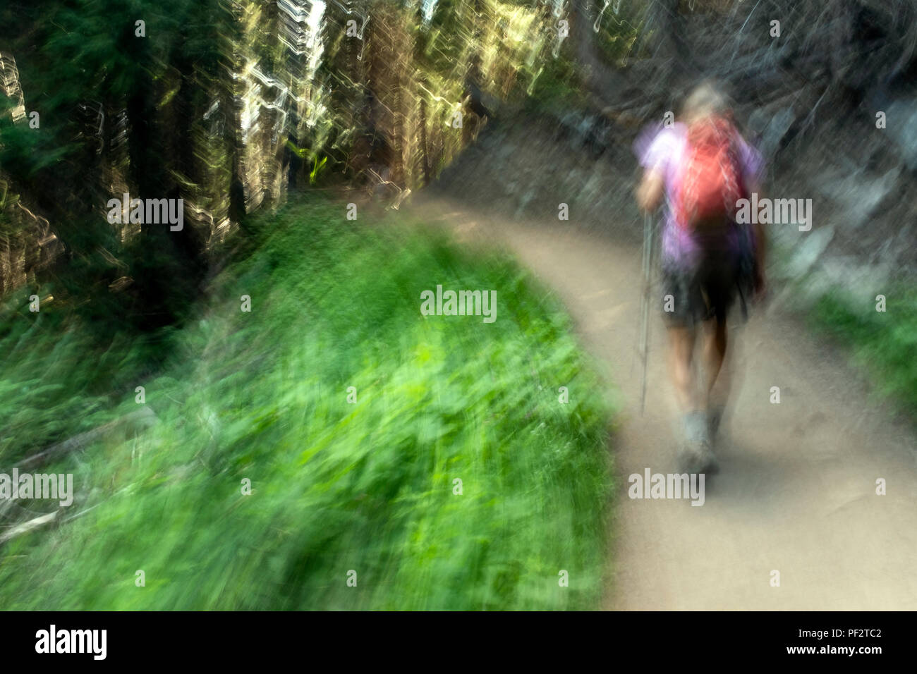 WA14749-00...WASHINGTON - Hiker on the Glacier Basin Trail near the White River Campground in Mount Rainier National Park. - Stock Image