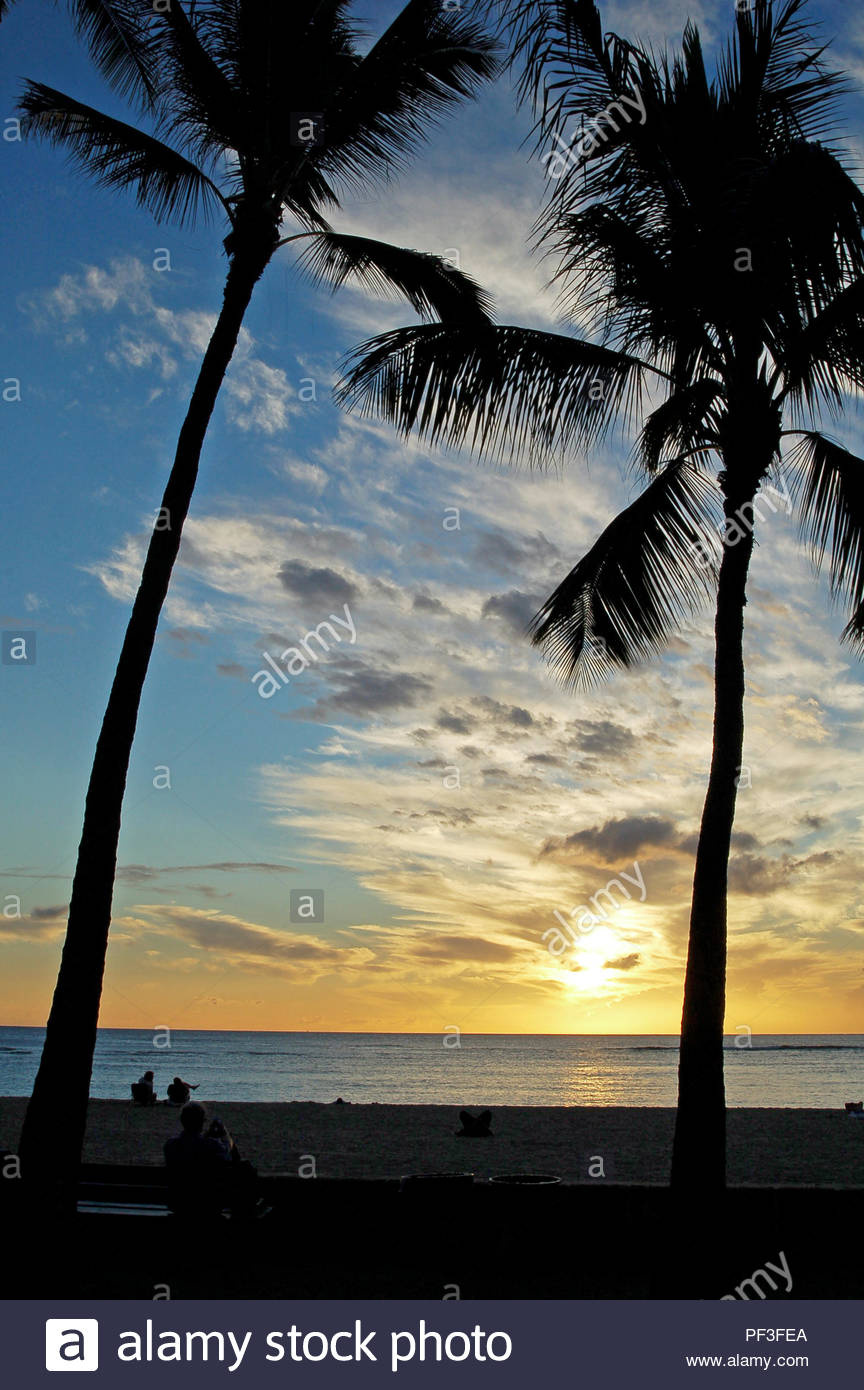 Palm Trees At Sunset Near Waikiki Beach Honolulu Hawaii Usa