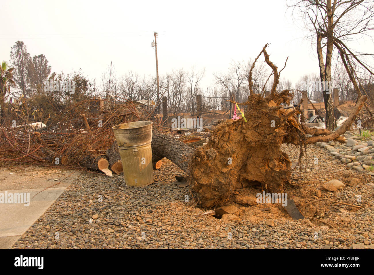 home burned to the ground with tree totally uprooted by tornado in the recent wild fire fire storm in Redding, California. Smoke and ash in the air as - Stock Image