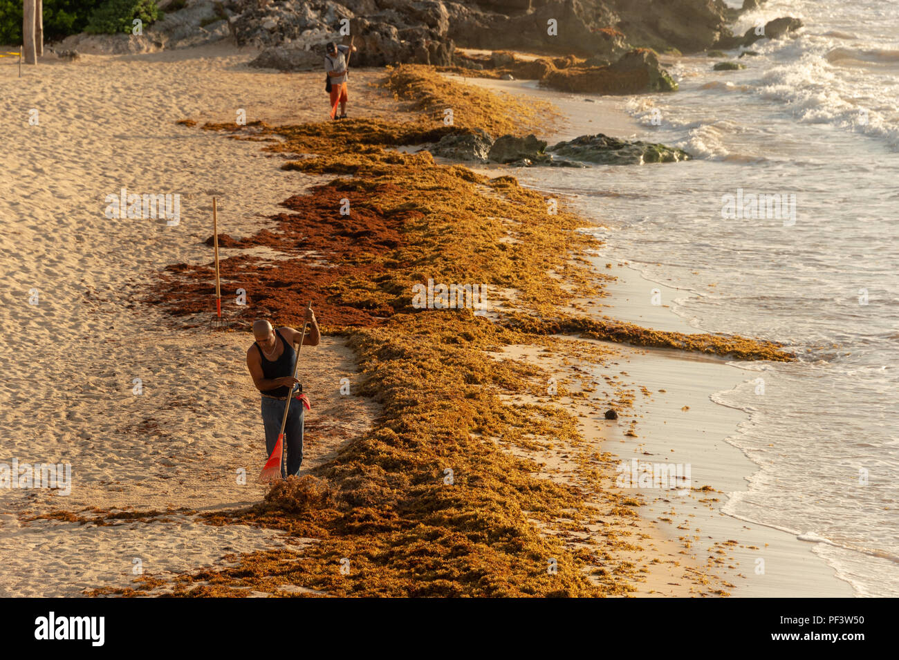 Tulum, Mexico - 7 August 2018: Two men are cleaning Sargassum