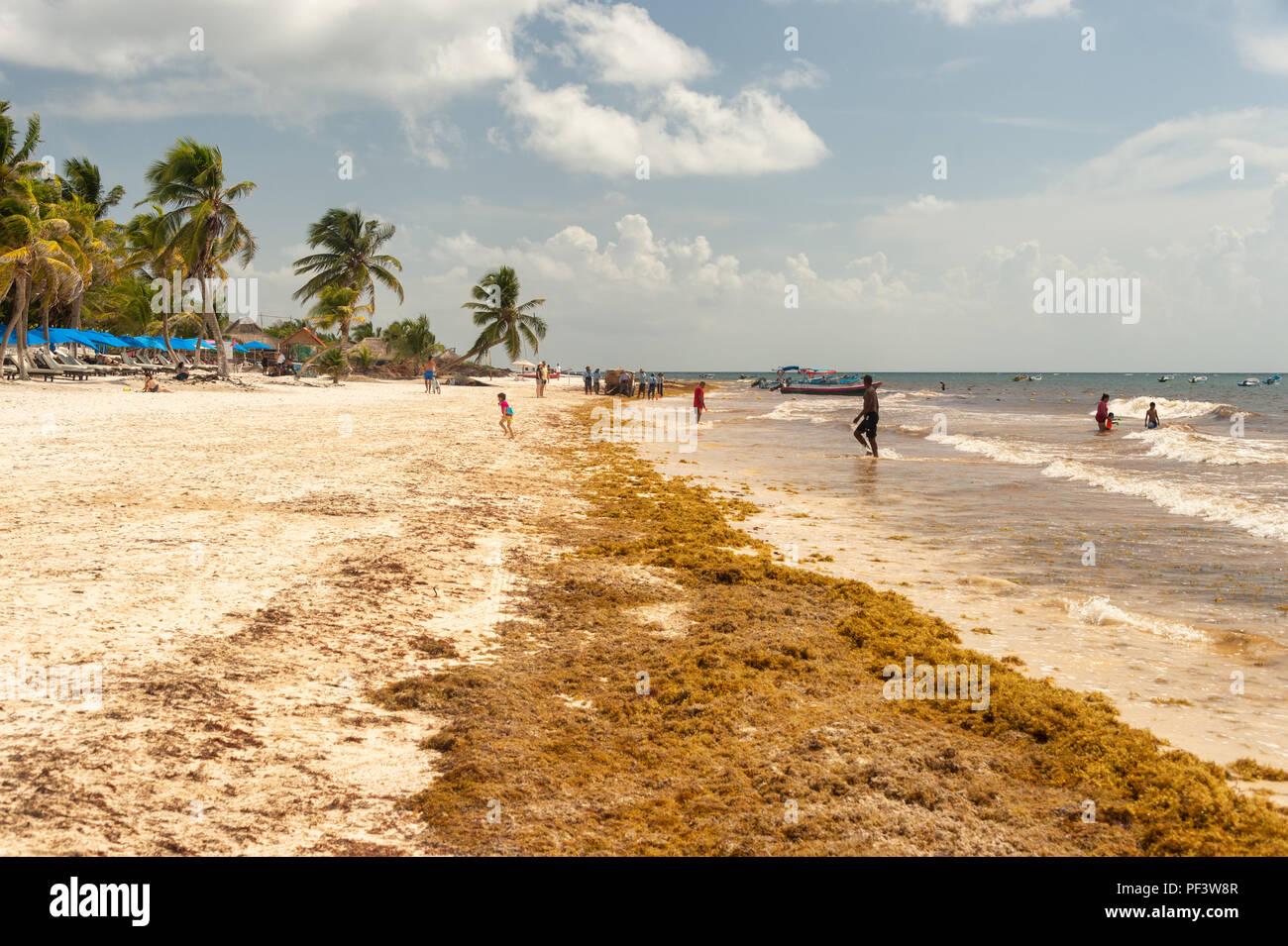 Tulum, Mexico - 12 August 2018: patches of Sargassum seaweed