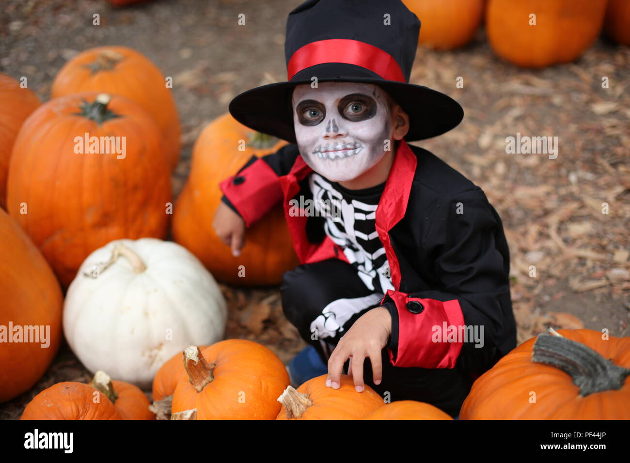 Trick or treat. Boy in a Halloween costume of skeleton with hat and smocking between orange pumpkins - Stock Image