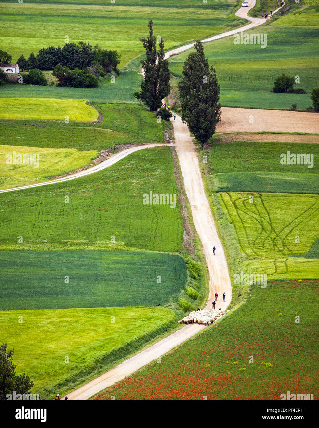 View of the route of the Camino de Santiago the way of St James as it leaves the town of Castrojeriz - Stock Image