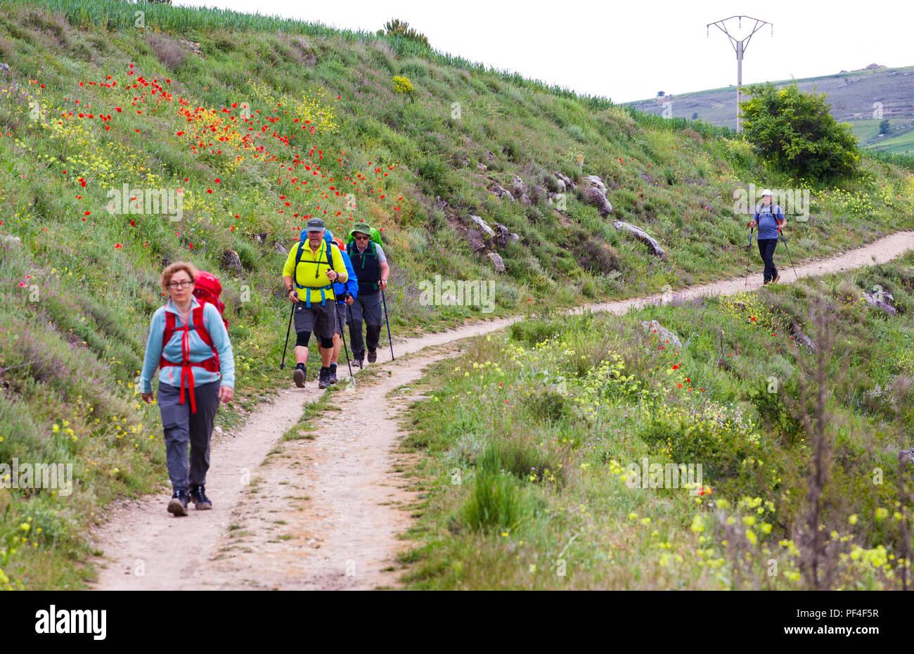 Pilgrims men and women walking on the way of St James the Camino de Santiago between Hontanas and Castrojeriz Burgos Castille y Leon Spain - Stock Image