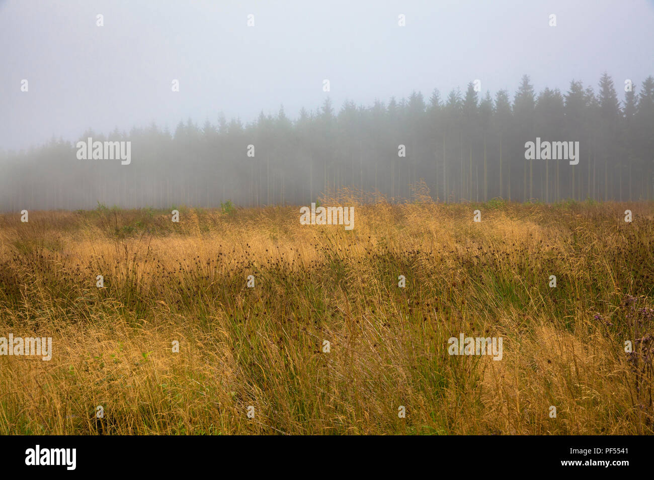 on the plateau of the high-moor High Fens in the east of Belgium.  auf dem Plateau des Hochmoors Hohes Venn, Belgien. Stock Photo