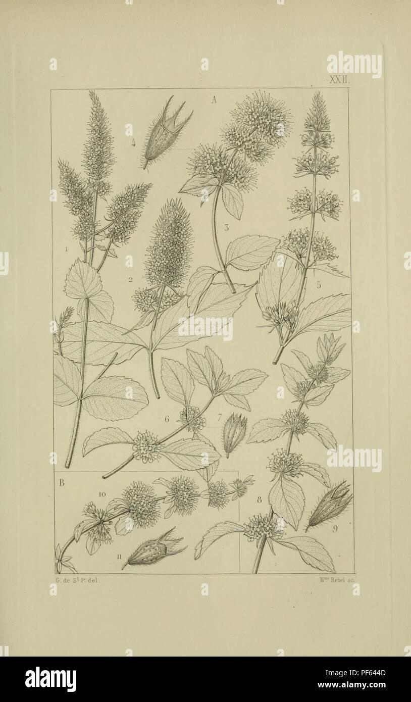 Atlas de la Flore des environs de Paris 787151f05d57
