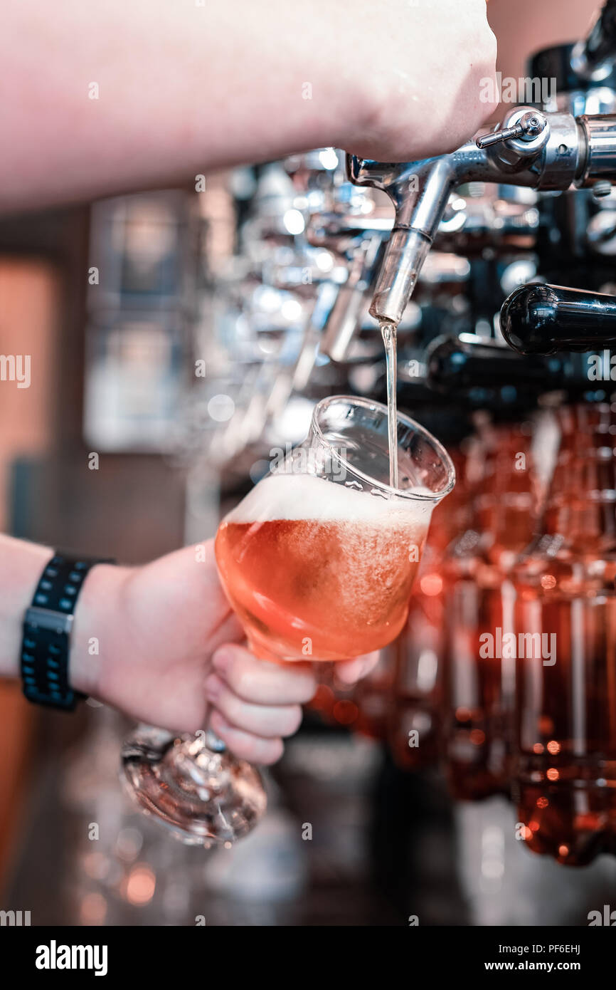 Professional barman pouring beer of the first tap - Stock Image