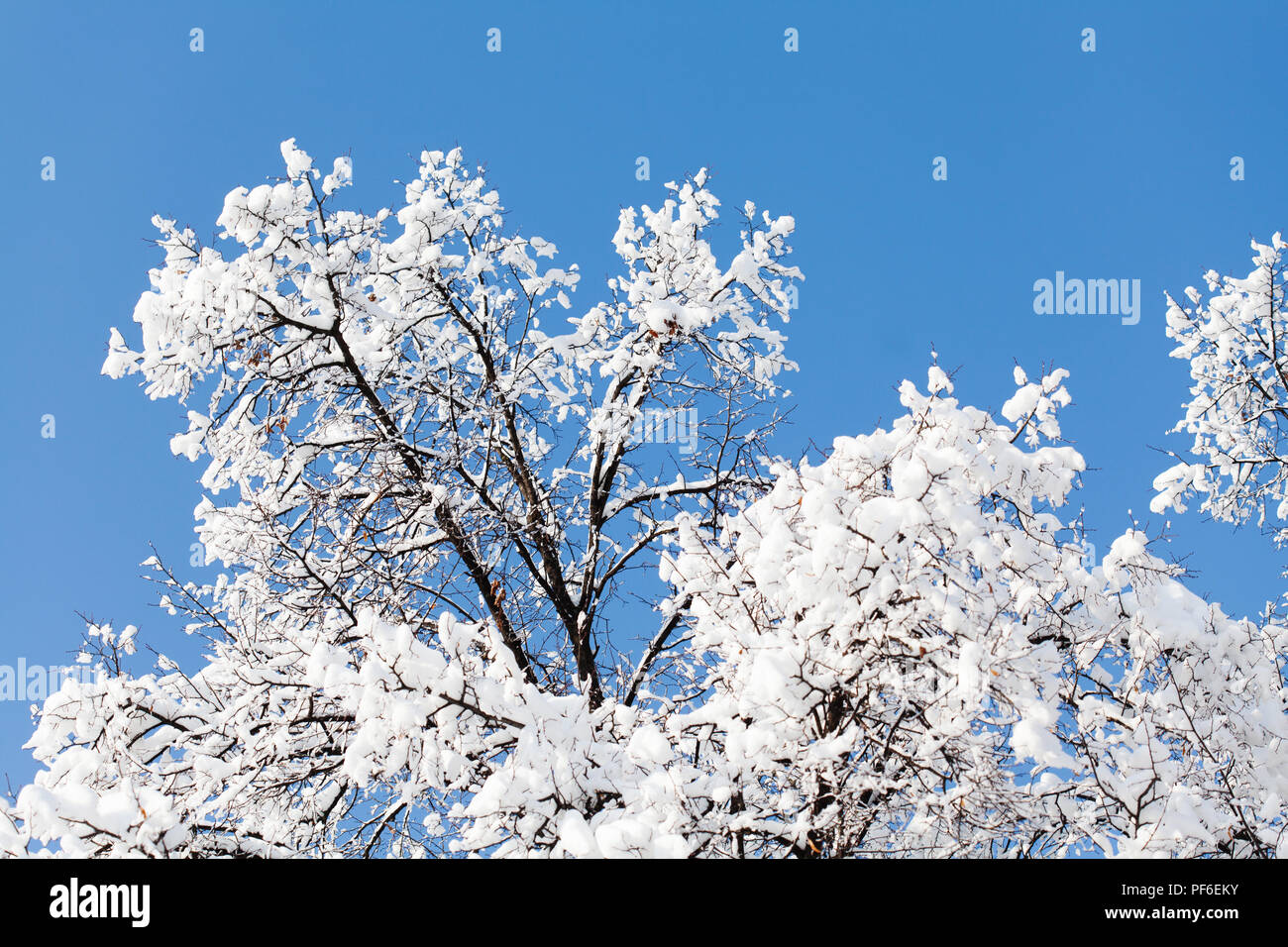 winter frost scenery tree bush snow stock photos winter frost