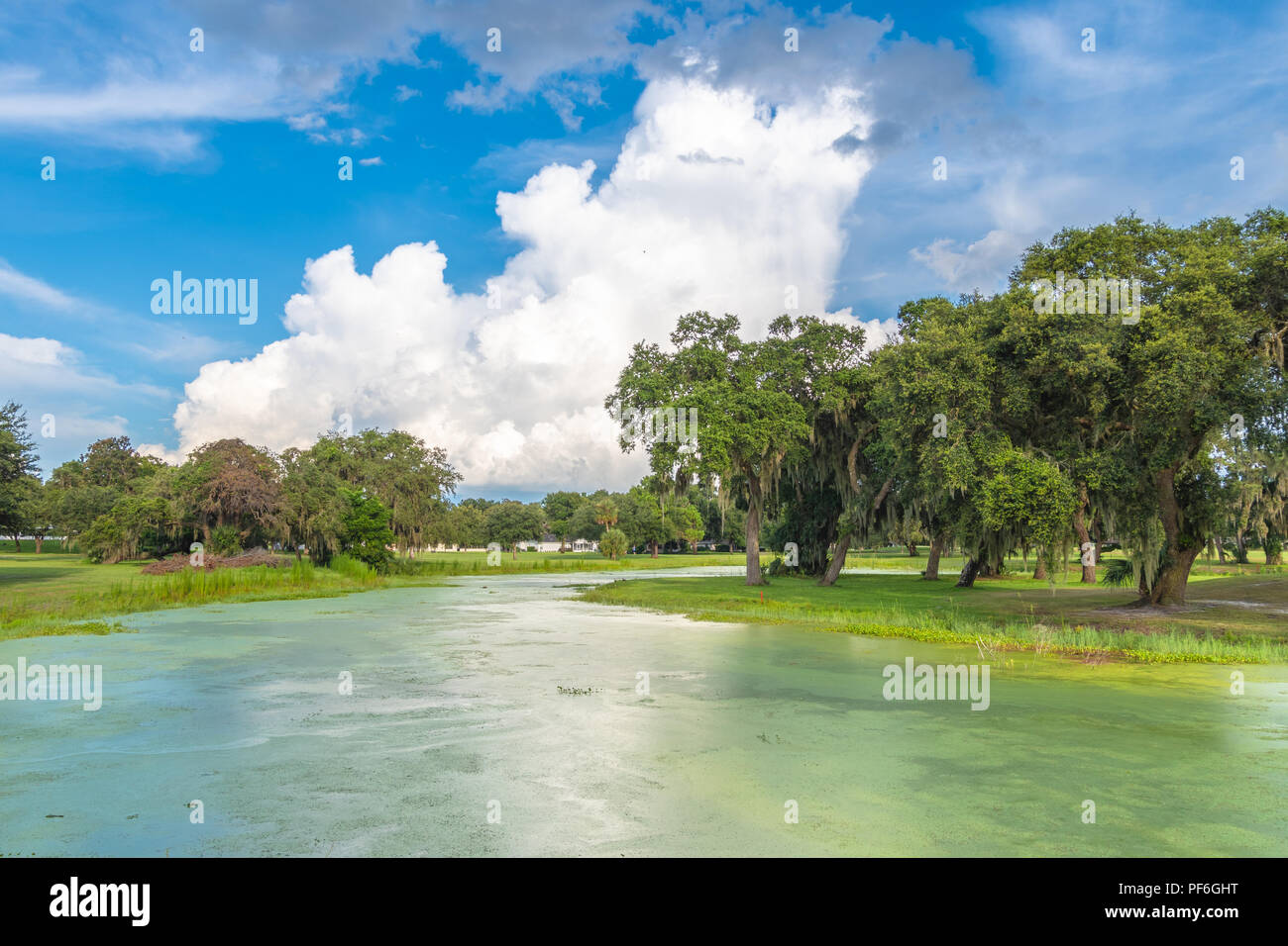 Late afternoon summer cumulonimbus clouds build in central Florida over a pond covered in duckweed. These clouds are often harbingers of severe thunde - Stock Image