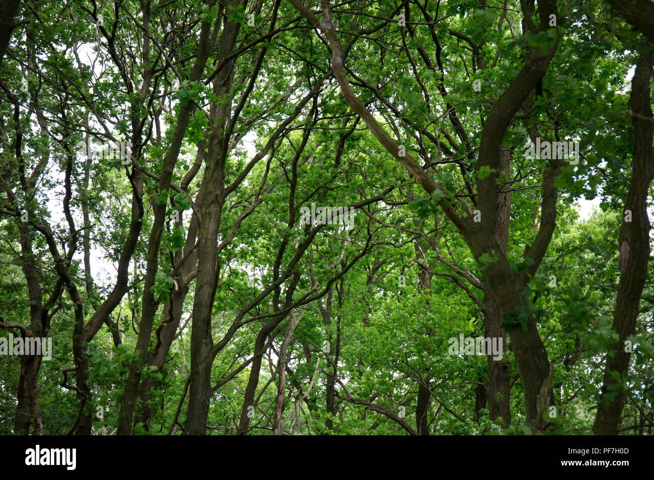 Forrest - Stock Image