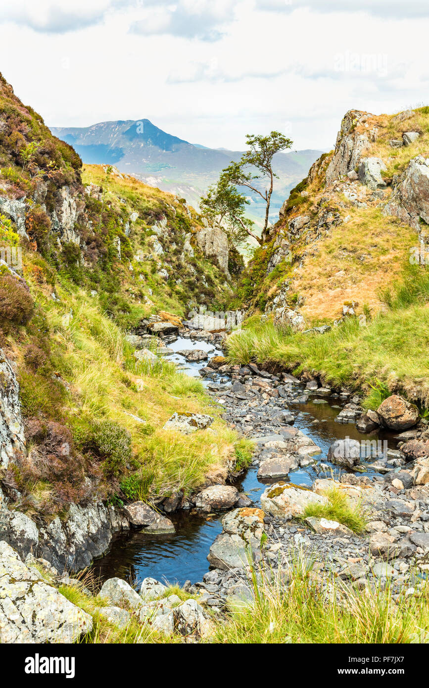 Mini-gorge on Newlands Beck from the Dale Head–High Spy track in the northwestern fells of the Lake District. The distant peak is Causey PIke. - Stock Image
