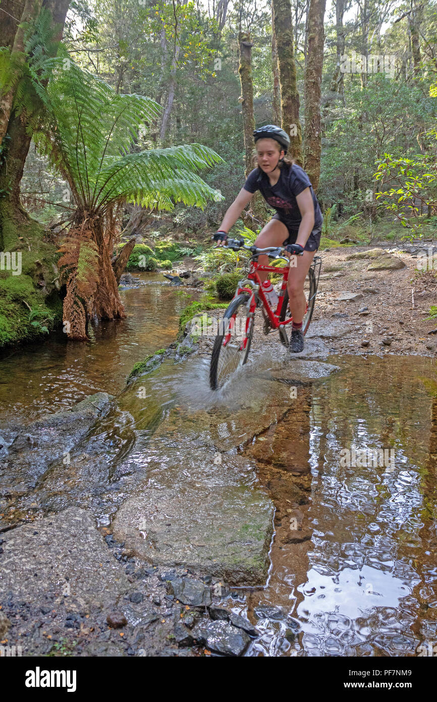 Girl cycling on the Blue Tier trail at Blue Derby - Stock Image