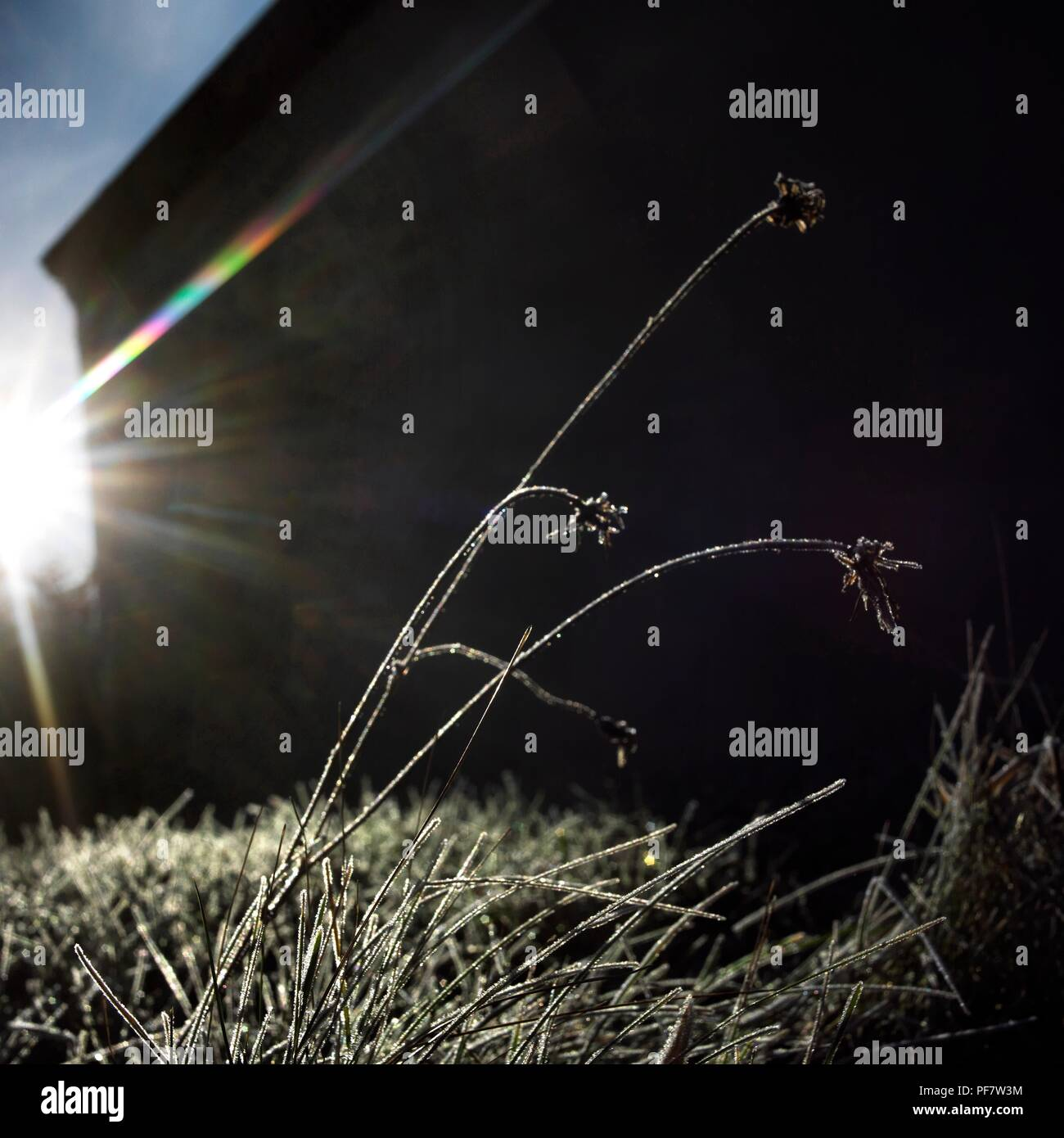 Close up on of grass covered with frost. - Stock Image