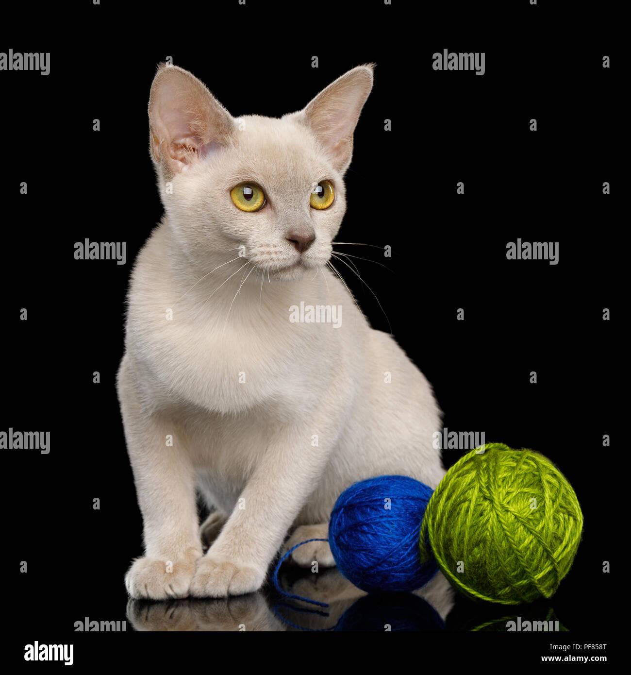 AmiCats Burmese Cat amigurumi crochet pattern in 2020   Cat ...   1390x1300