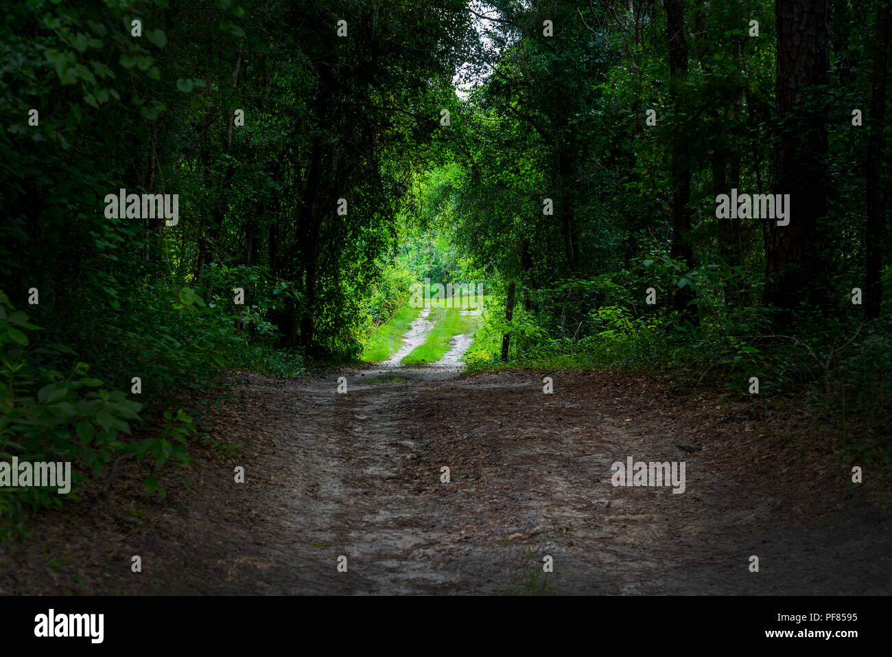 Mysterious pathway entrance. - Stock Image