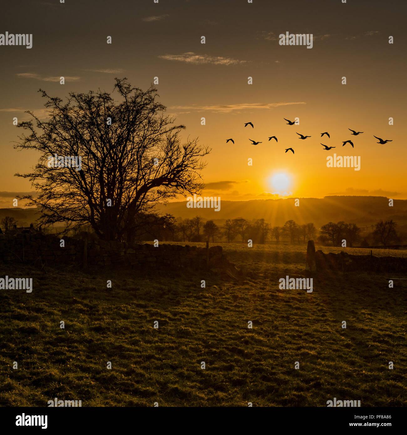 Birds on the move over Stanton in Peak, Derbyshire... - Stock Image