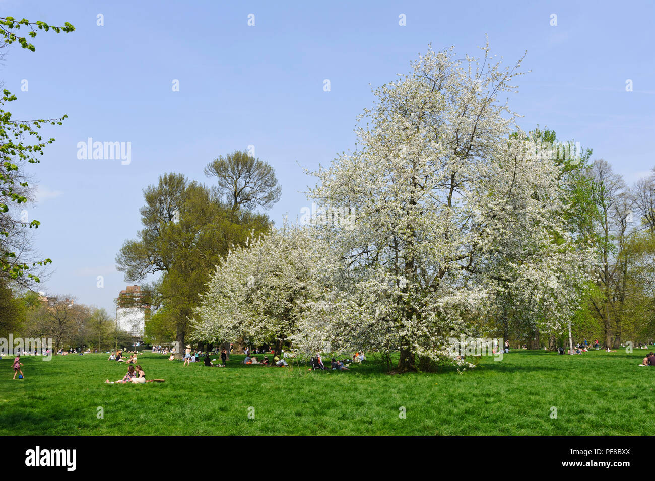People enjoying the hot weather in Hyde Park, London, England, UK - Stock Image