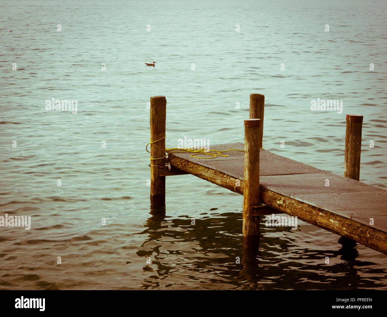 Close-up of a wooden pontoon on a lake with green waters. Lac Léman. Haute Savoie, Auvergne Rhone Alpes, France - Stock Image