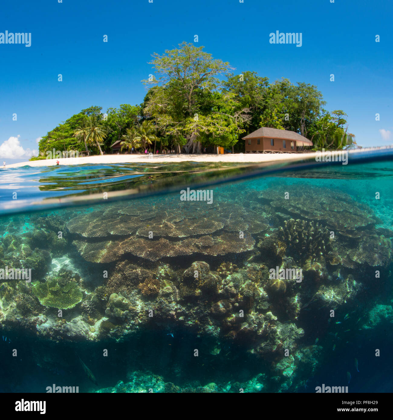A square, split-level underwater photo of coral reef at the 'Drop-off' & Sipadan Island, Sabah, Malaysian Borneo Stock Photo