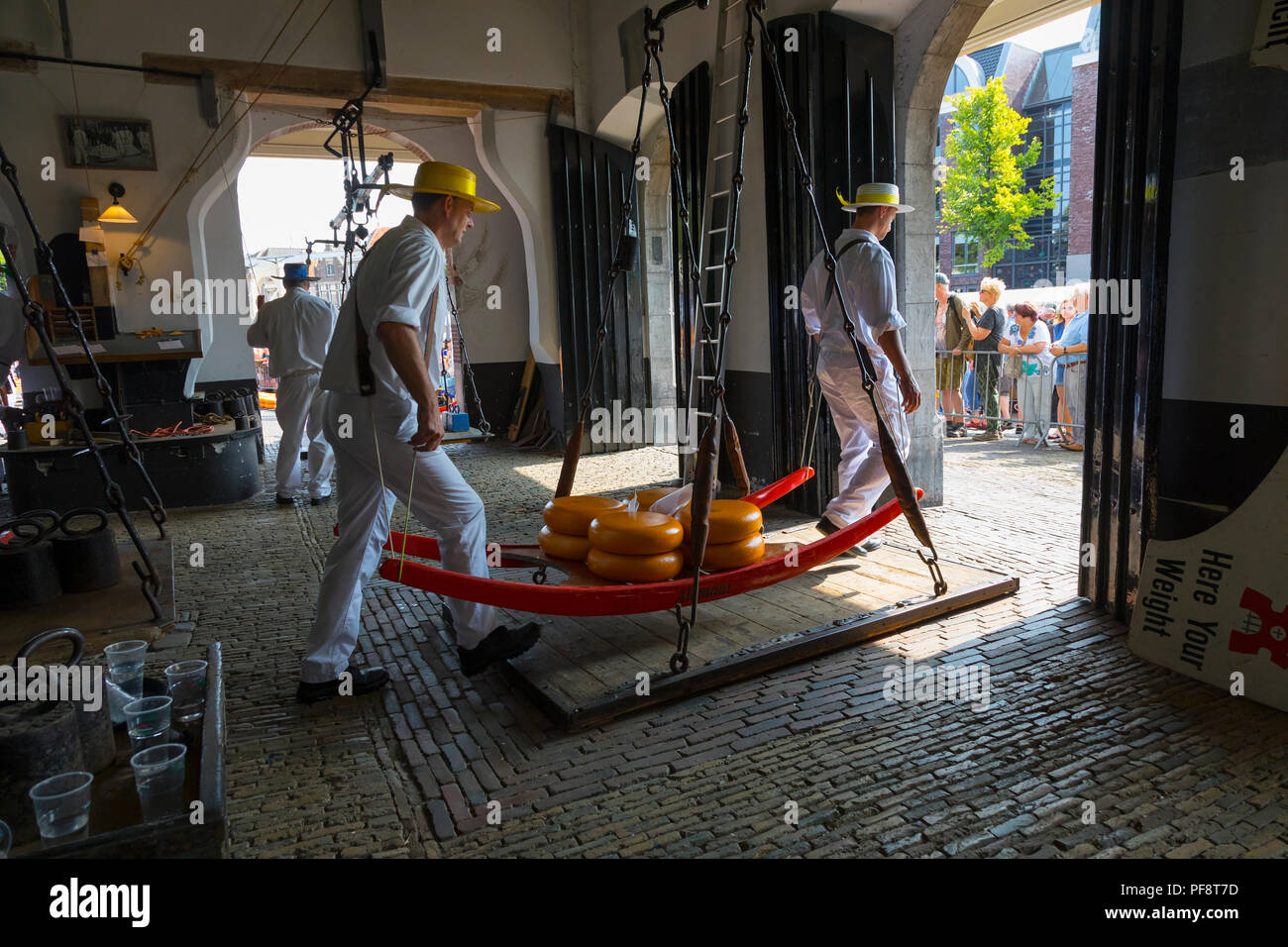 Alkmaar, Netherlands - July 20, 2018: Cheese carriers putting the cheeses on the scale to be weighted in the Waag before being sold on the market - Stock Image