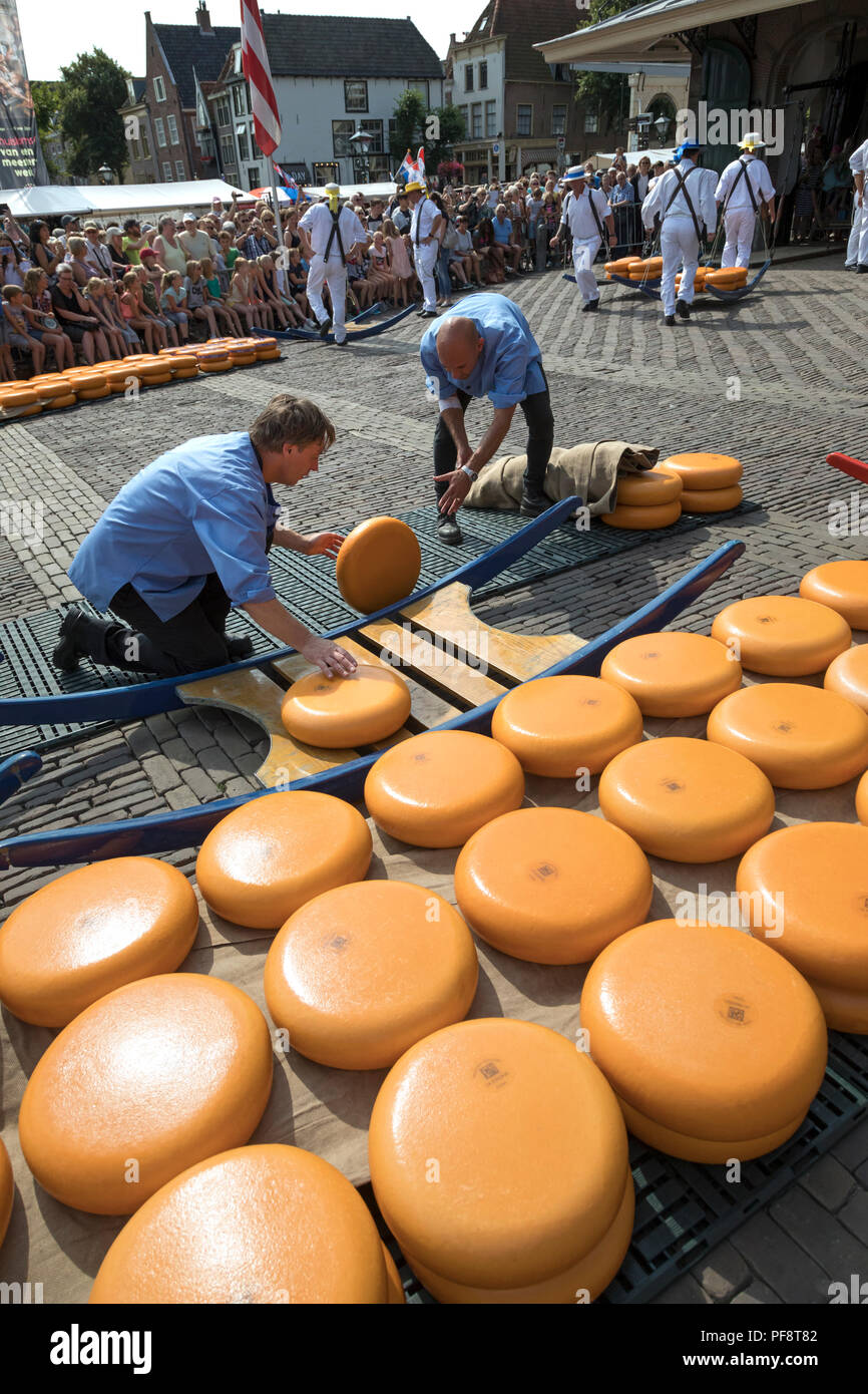 Alkmaar, Netherlands - July 20, 2018: Men are loading cheeses on a wooden stretcher  in front of the Waag building during the cheese market - Stock Image