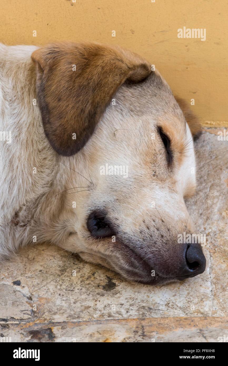 a sleeping dog. - Stock Image
