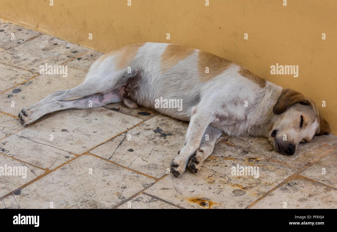A large dog sleeping on the pavement or street asleep. - Stock Image
