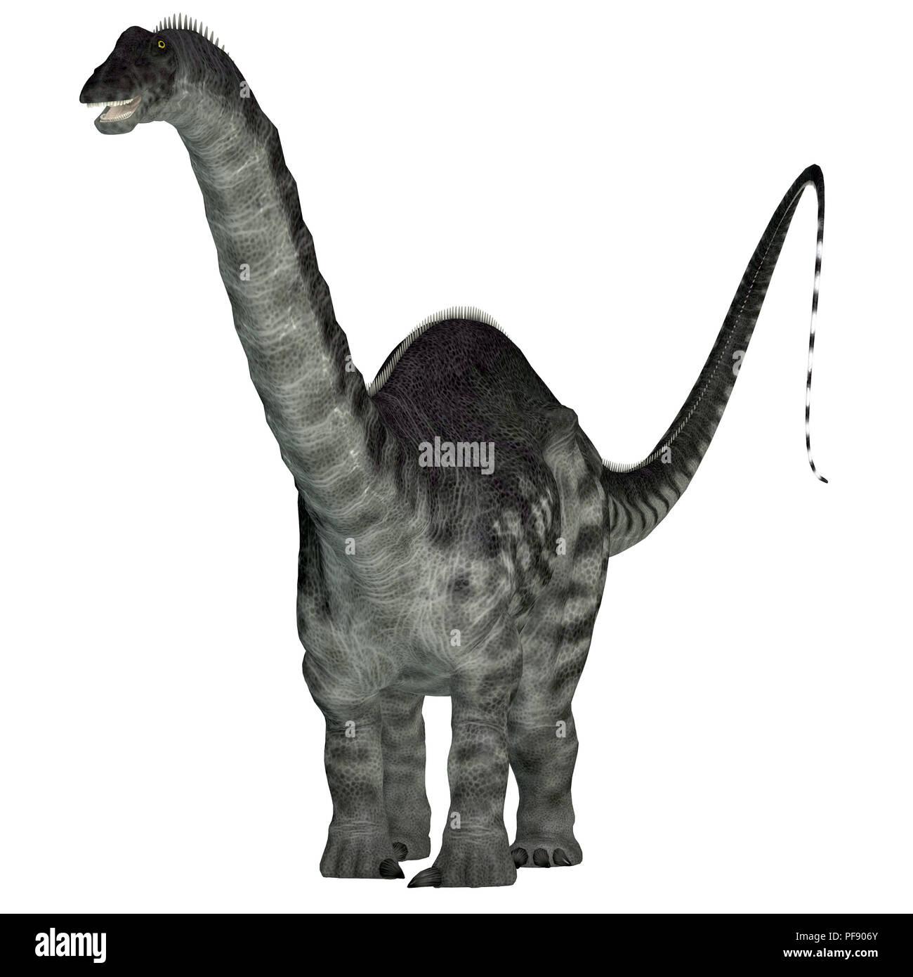 Apatosaurus Dinosaur - Apatosaurus was a herbivorous sauropod dinosaur that lived in North America during the Jurassic Period. Stock Photo