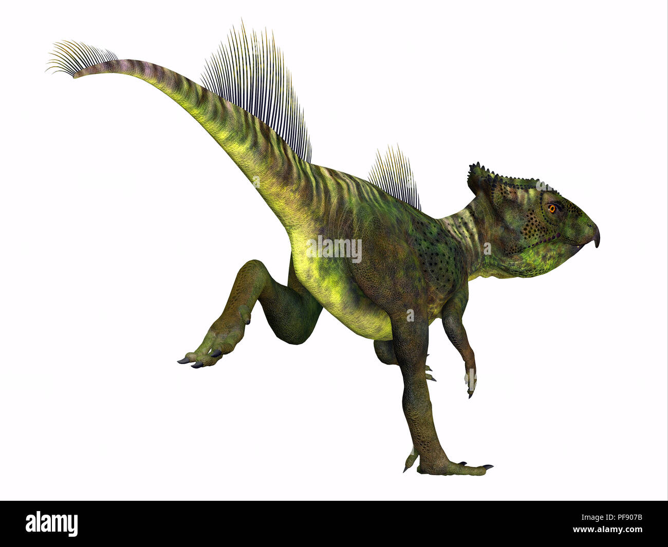 Archaeoceratops Dinosaur - Archaeoceratops was a Ceratopsian herbivorous dinosaur that lived in China in the Cretaceous Period. - Stock Image