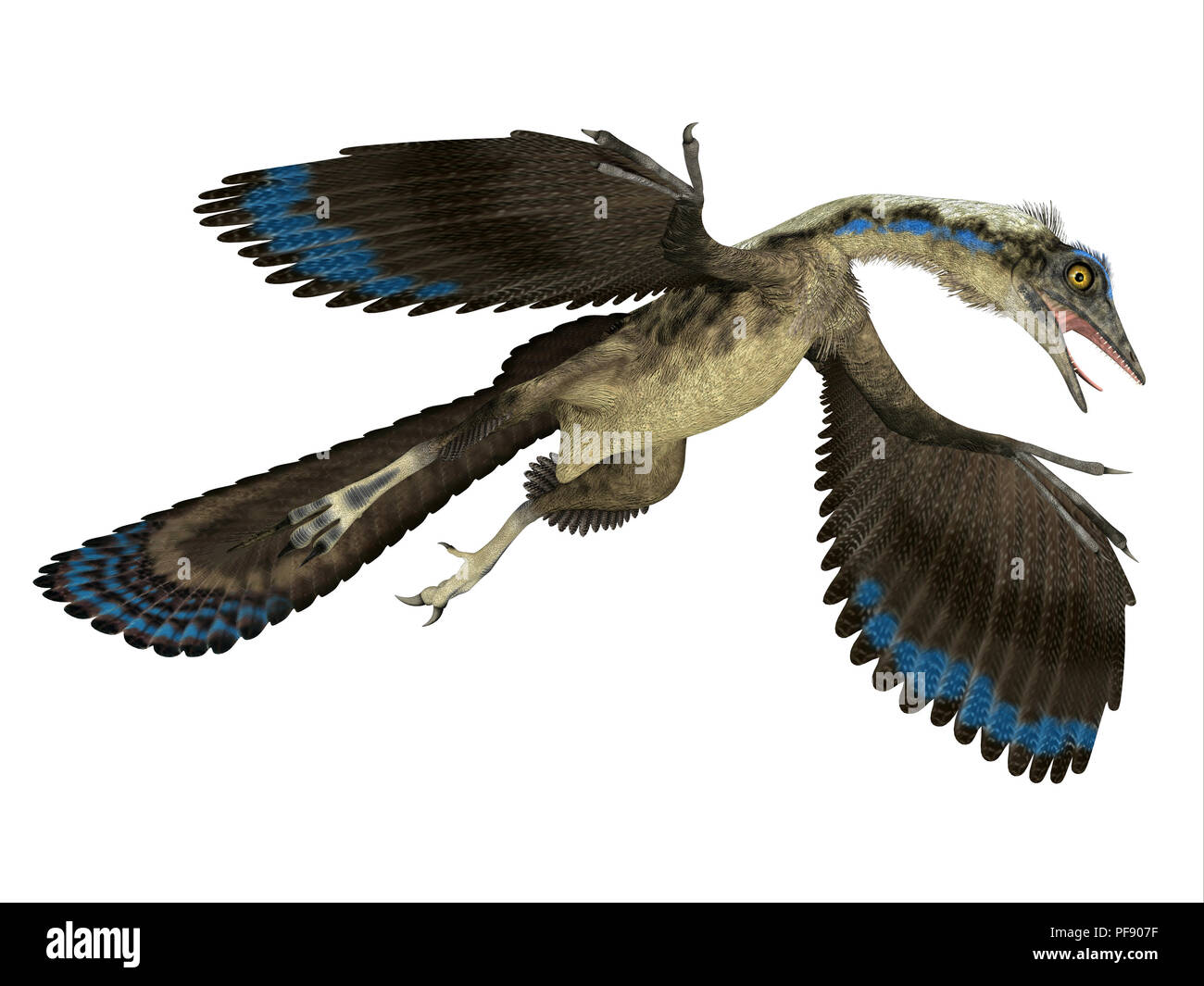 Archaeopteryx Reptile  - Archaeopteryx was a carnivorous Pterosaur reptile that lived in Germany during the Jurassic Period. - Stock Image
