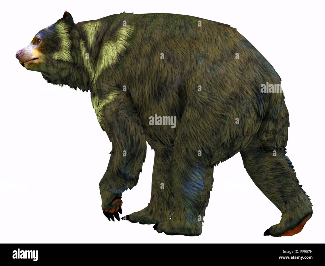 Arctodus Bear - Arctodus was an omnivorous short-faced bear that lived in North America during the Pleistocene Period. - Stock Image