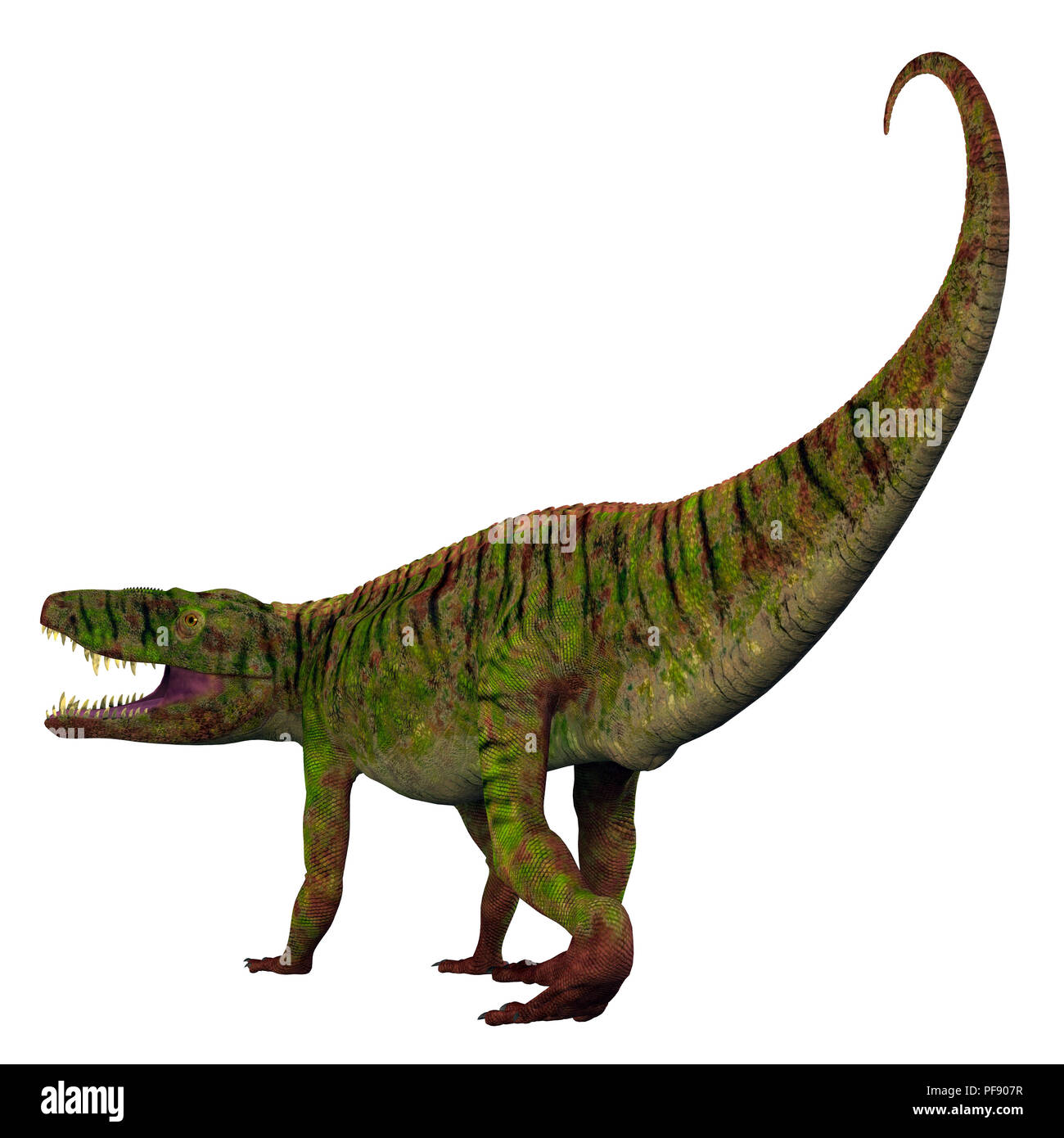 Batrachotomus Dinosaur - Batrachotomus was a carnivorous archosaur dinosaur that lived in Germany during the Triassic Period. - Stock Image