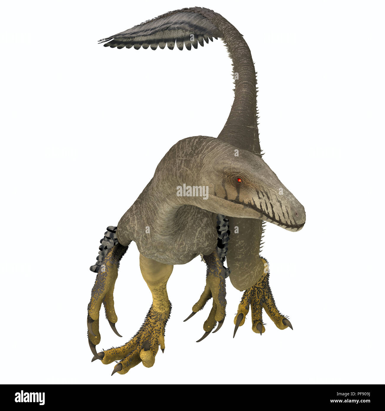 Dakotaraptor was a carnivorous dromaeosaurid theropod dinosaur that lived in South Dakota, North America during the Cretaceous Period. - Stock Image
